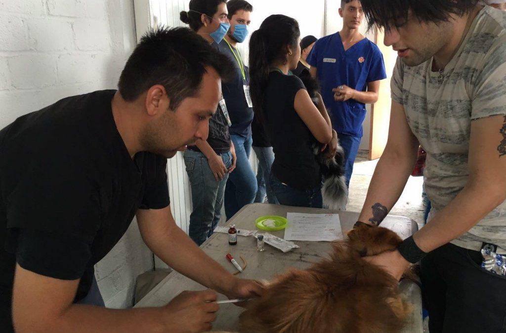 Zapopan ofrece esterilizaciones gratuitas para cuidar la salud de los animales del municipio