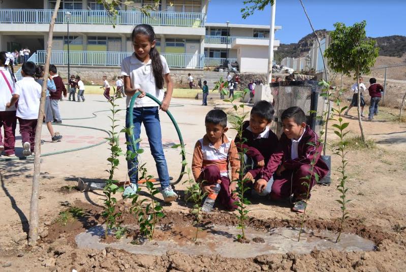 Programa de reforestación en escuelas