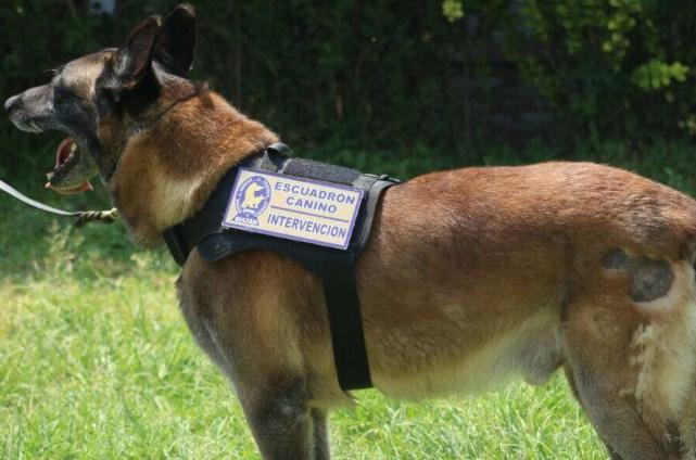 Perros de la Policía que fueron jubilados