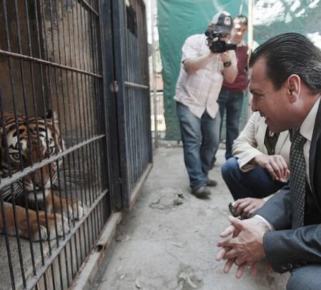 Zapopan actúa en favor de la preservación y el cuidado de especies felinas