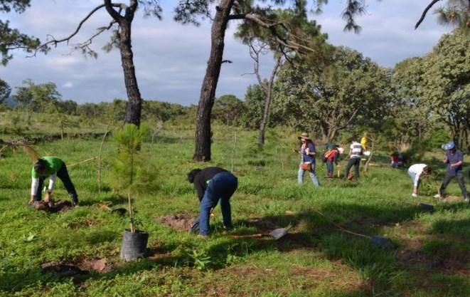Continúa campaña de reforestación en el municipio de Zapopan