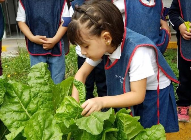 Rinden frutos huertos escolares de DIF Zapopan