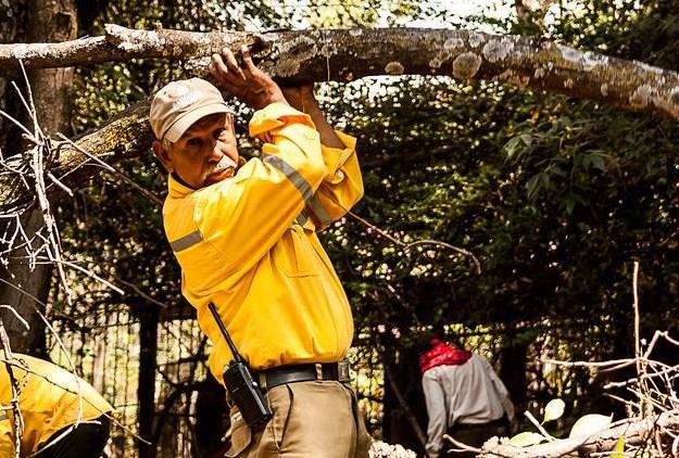 Realiza Zapopan acciones de manejo de plantaciones y control fitosanitario