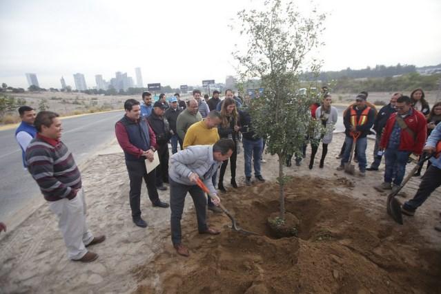 Zapopan realiza forestación en el camellón de avenida Universidad