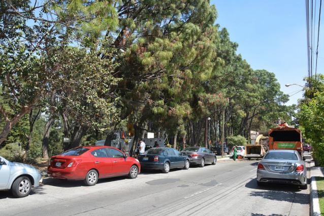 Continúa Zapopan con acciones para la preservación de la flora del espacio público