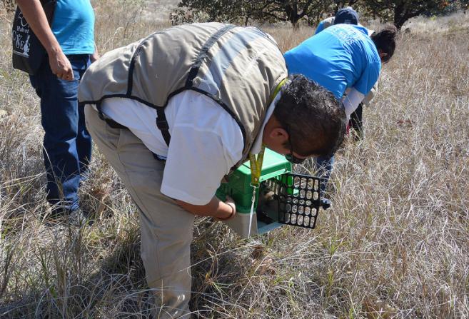 Libera Zapopan animales silvestres en la zona de Huaxtla