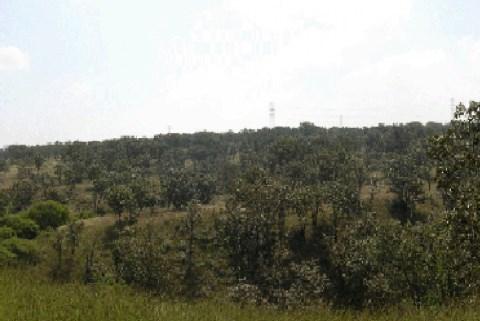 Pese a observaciones, Semadet valida proceso para elaborar el Programa de Ordenamiento Ecológico Local de Zapopan