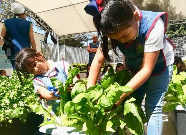 DIF Zapopan implementa programa de Huertos Urbanos en Centros de Desarrollo Infantil