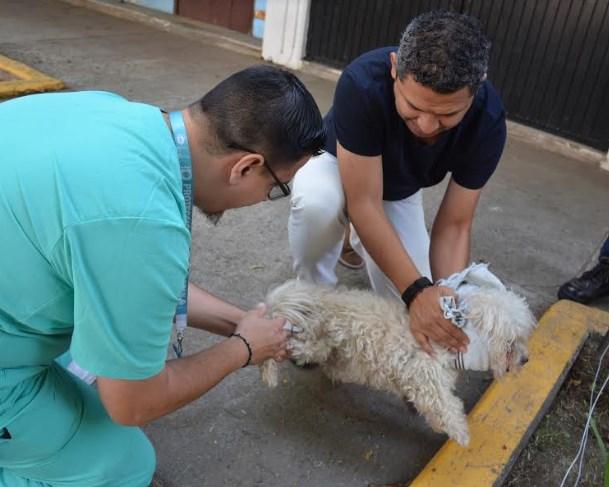 Invita Zapopan a vacunar mascotas contra la rabia