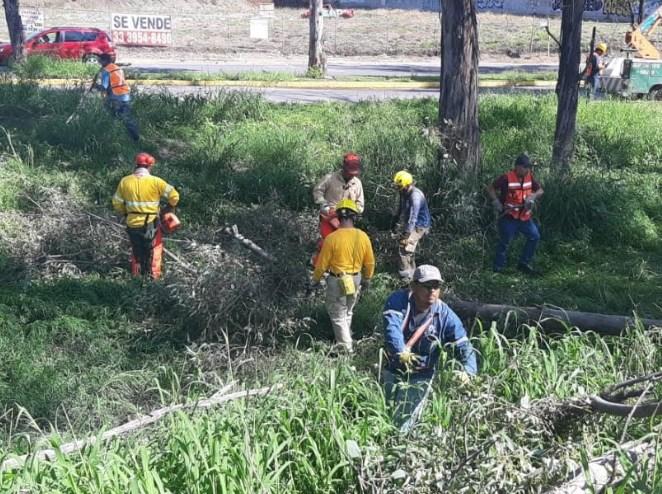 Retiran árboles secos para mitigar riesgos ante el temporal de lluvias
